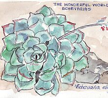 Echeverias have it all by Maree  Clarkson