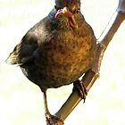 Female Blackbird (Turdus merula) by Neville Hawkins