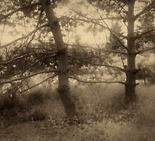 pines in sepia tone by fodorpetya