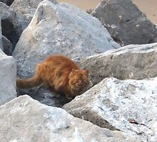 CAT ON ROCKS by gothgirl