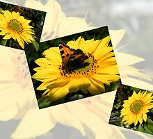 Sunflower collage by ElsT