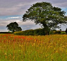 North Norfolk Field by Neville Hawkins