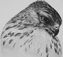 Hawk Portrait by AubreyC