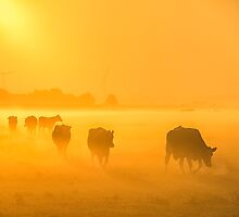 Misty Morning by THHoang