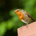 Mr. Robin by Mark Ramsell