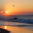 Carolina Coastal Morning by Sandy Woolard