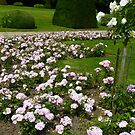 Rose garden at Tervuren  by bubblehex08