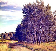 White Birch  by BrittneyMarie83