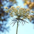 Queen Anne's Lace and Bokeh by Linda  Makiej