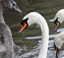 Swan Necks by naturalnomad