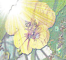Sunlight on nasturtium by ♥⊱ B. Randi Bailey