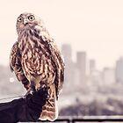 Wildlife 2014 by Mira Fertin