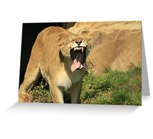 Lioness Toothless Yawn Greeting Card