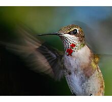 Hummingbird Portrait Photographic Print