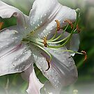 Frosted Lily by Monnie Ryan