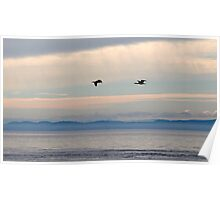 Cormorants in the Clouds Poster