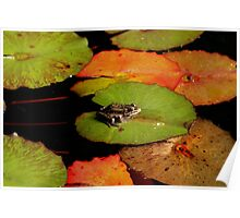 Frog Launching Pads Poster