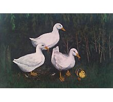 Babysitting Ducks Photographic Print