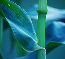 Cornstalk by Laurie Minor