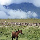 Brown Horse in a Mountain Meadow by rhamm