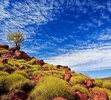 Hill Top Tree II by Pene Stevens