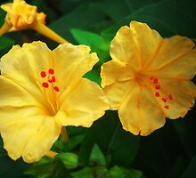 YELLOW FLOWERS by Vitta