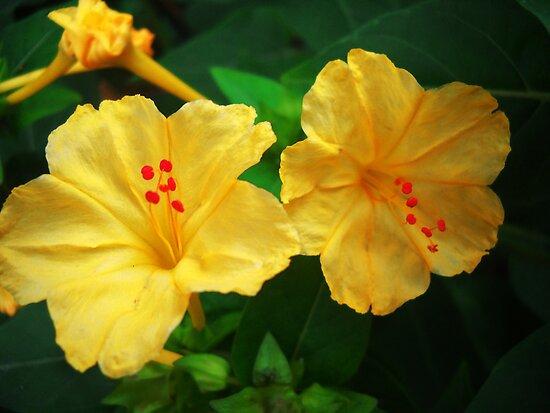 YELLOW FLOWERS by Vitta