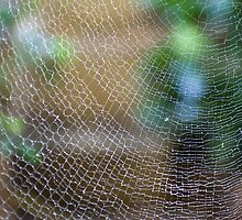 Golden Silk Orb Weaver's Web Design Magic by Kerryn Madsen-Pietsch