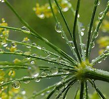 From the Herb Garden by Lynn Gedeon