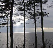 Orwell Bay, Prince Edward Island by John Whitaker