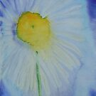 Daisy by Deborah Pass
