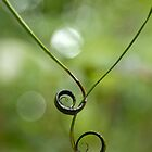 Linked Vines by Martin Stringer