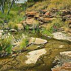 Tupul waterhole by Roger Neal