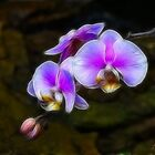Orchid Fractals by Tracy Deptuck