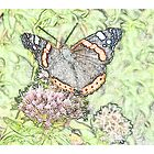 Butterfly on a flower by Jacqueline Turton