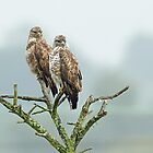 A Beautiful Pair of Buzzards by Mark Hughes