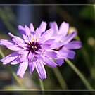 Pretty purple garden flower. Floral nature photography. by naturematters