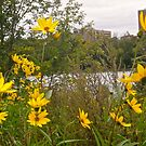 More Yellow Flowers by Shulie1