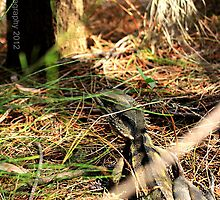 Bearded Dragon by RaiZdbyDINGOES