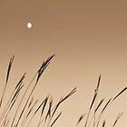 Moon on the Prairie by Brian Gaynor