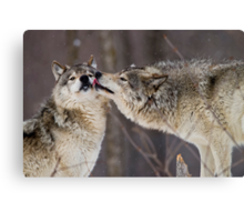 Kissy Face Canvas Print