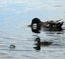 Duckling by AxiomaticArt