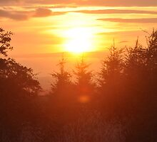 Scottish sunset over forest by Izzy83