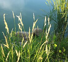 Lakeside Weeds by AngelaBishop