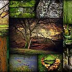 Collage of Algae  by SylviaHardy
