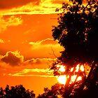 Texas Sunset by LeRoyM