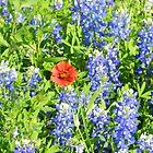 Texas Flowers by LeRoyM