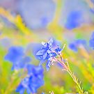 Blooming Blue by faithie