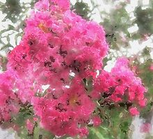 Crape Myrtle Watercolor by Christopher Johnson