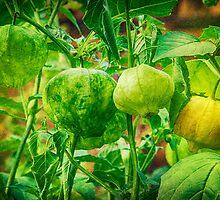 Tomatillos  by Bo Insogna